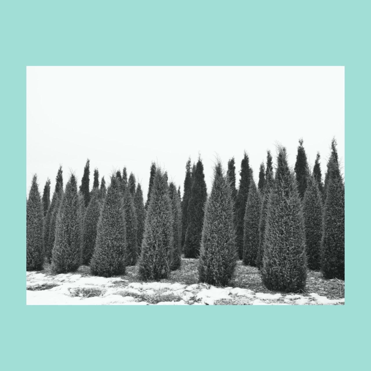 tree, cold temperature, snow, winter, nature