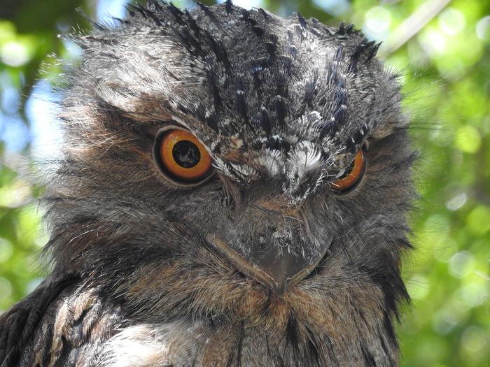 EyeEm Selects Bird Portrait Eyeball Looking At Camera Beak Eye Animal Eye Close-up Owl