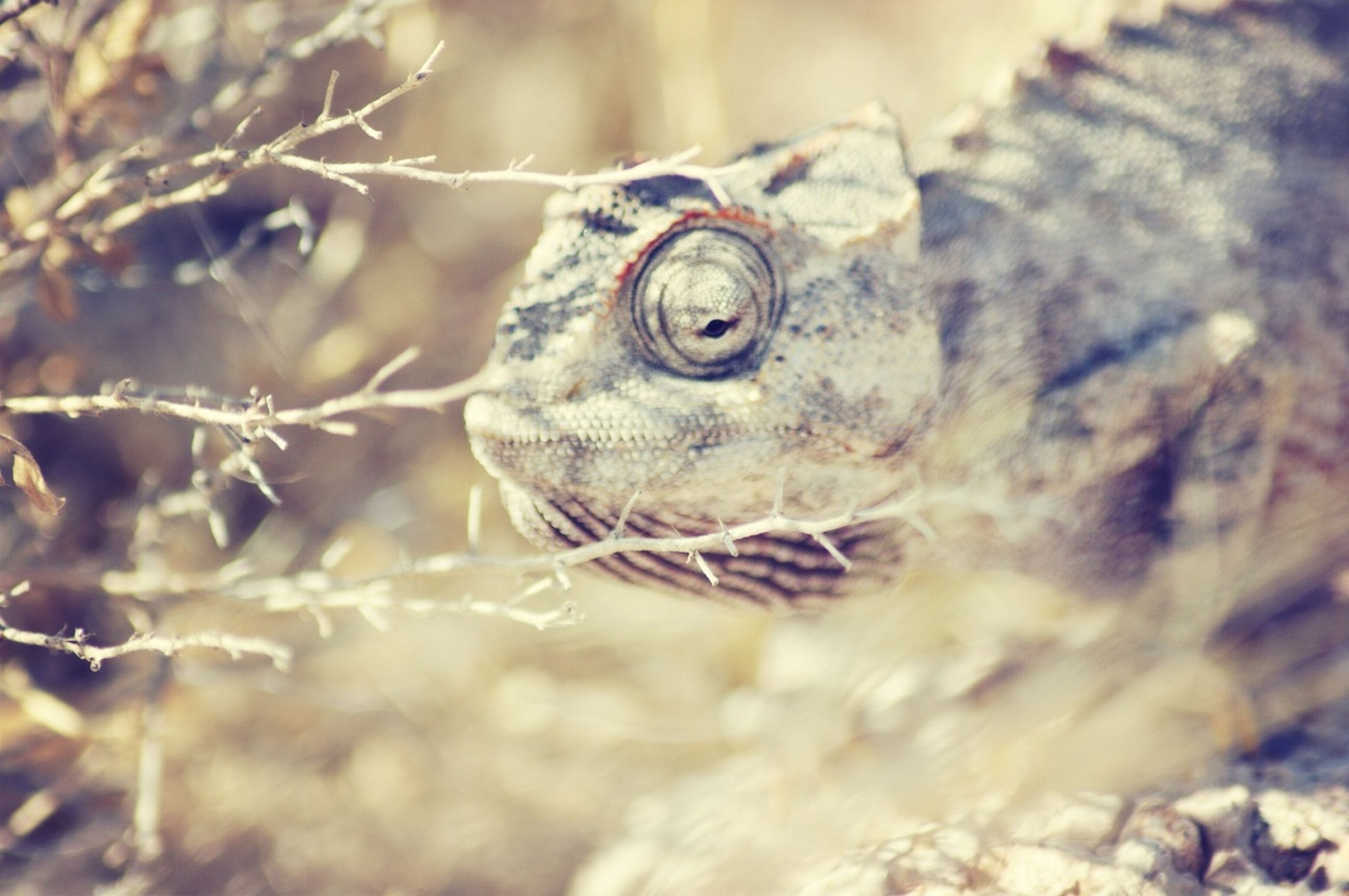 animal themes, one animal, animals in the wild, wildlife, close-up, focus on foreground, animal head, selective focus, portrait, nature, animal eye, looking at camera, outdoors, reptile, animal body part, day, no people, zoology, mammal