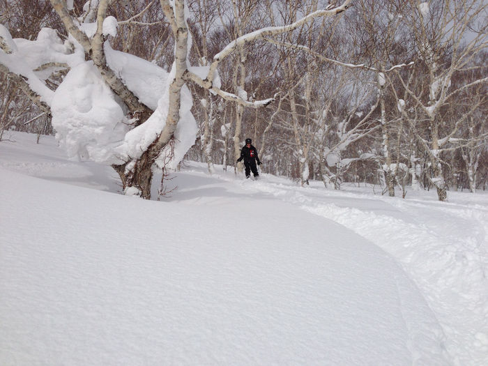 Beauty In Nature Cold Temperature Covering Landscape Leisure Activity Lifestyles Men Nature Non-urban Scene Powder Powder Day Schnee Season  Snow Tranquil Scene Tranquility Tree Walking Weather White Color Winter
