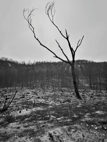 Burned and alone Burned Tree Nature Landscape Tree Outdoors Branch Winter