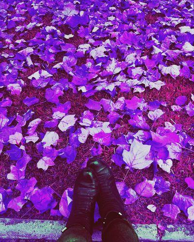 Cuando la realidad deja de serlo... One Person Personal Perspective Day Lifestyles Purple Low Section Real People Leaves Unamiradadistinta Square