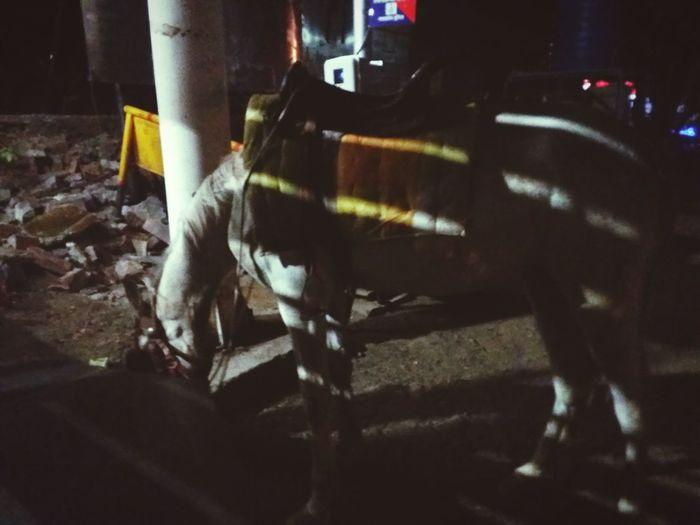 Horse <3 Horse
