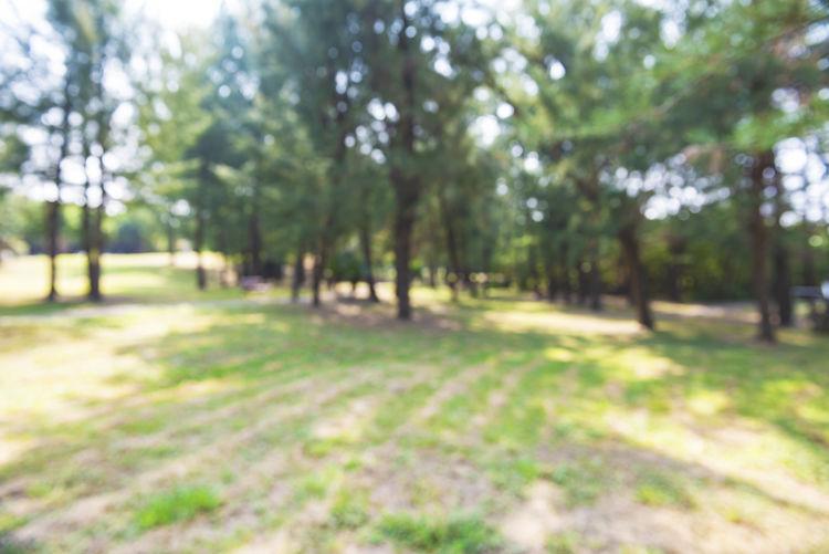 Blur Park Sun