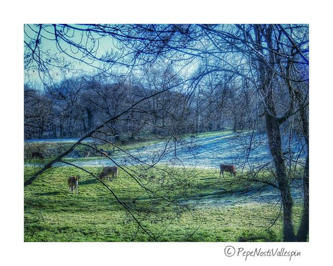 Pola De Siero Nature Outdoor Photography Naturephotography Poladesiero Landscape Beauty In Nature Green Color Iceandsun Nature Is Art