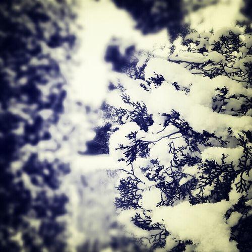 When It Snowed (: