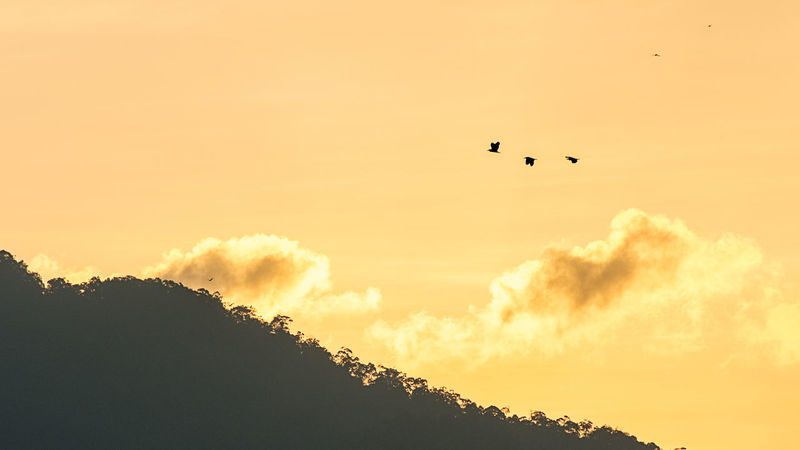 Sunrise Animal Themes Animal Wildlife Animals In The Wild Beauty In Nature Bird Bird Of Prey Cloud - Sky Day Flying Low Angle View Mid-air Nature No People One Animal Outdoors Scenics Silhouette Sky Spread Wings Sunset Tree