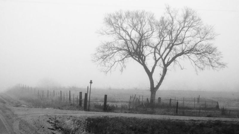 Visual Journal January 2017 Western, Nebraska Bare Tree Beauty In Nature Camera Work Eye For Photography EyeEm Best Shots Fog Foggy Morning Fujifilm Hazy  Isolated January 2017 Landscape Lone MidWest My Neighborhood No People Outdoors Photo Diary Rural America Small Town America Still Life Tranquil Scene Tree Visual Journal Wintertime