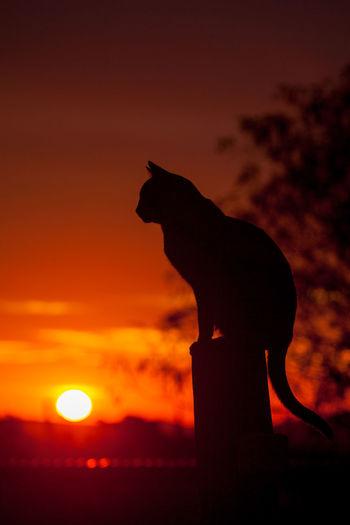 Silhouette horse against orange sky