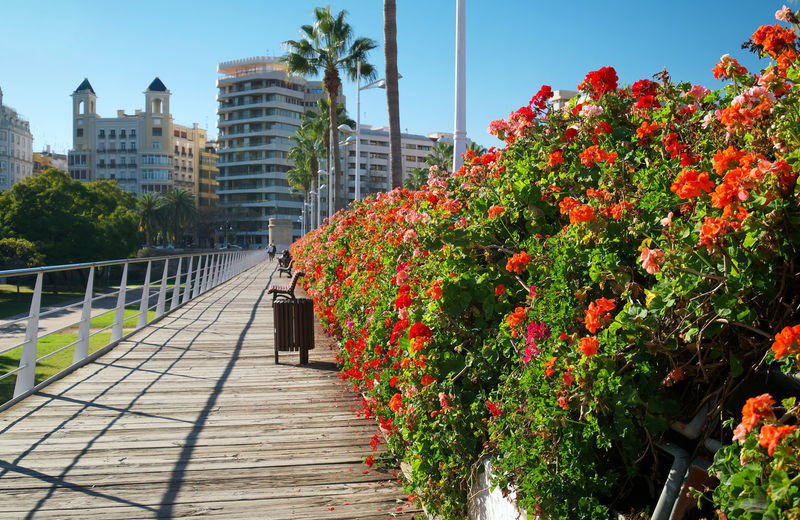 View of flowering plants by railing against buildings in city
