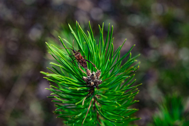 Close-up of insect on pine tree