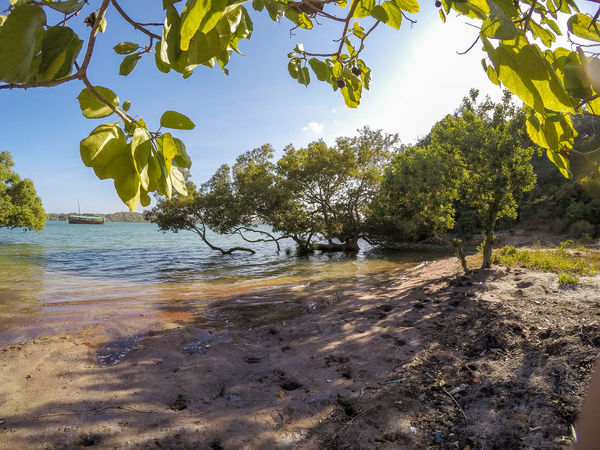Beach Beauty In Nature Blue Branch Clear Sky Day Green Color Growth Leaf Nature Non-urban Scene Outdoors Remote Scenics Sea Sky Summer Sunlight Sunny Tranquil Scene Tranquility Travel Destinations Tree Vacations Water