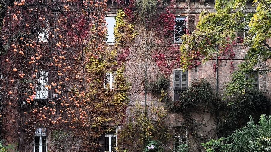Ivy growing on tree during autumn