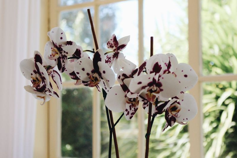 Wedding Orchid Decoration Decoration Plant Focus On Foreground Close-up Fragility Growth Vulnerability  Flowering Plant