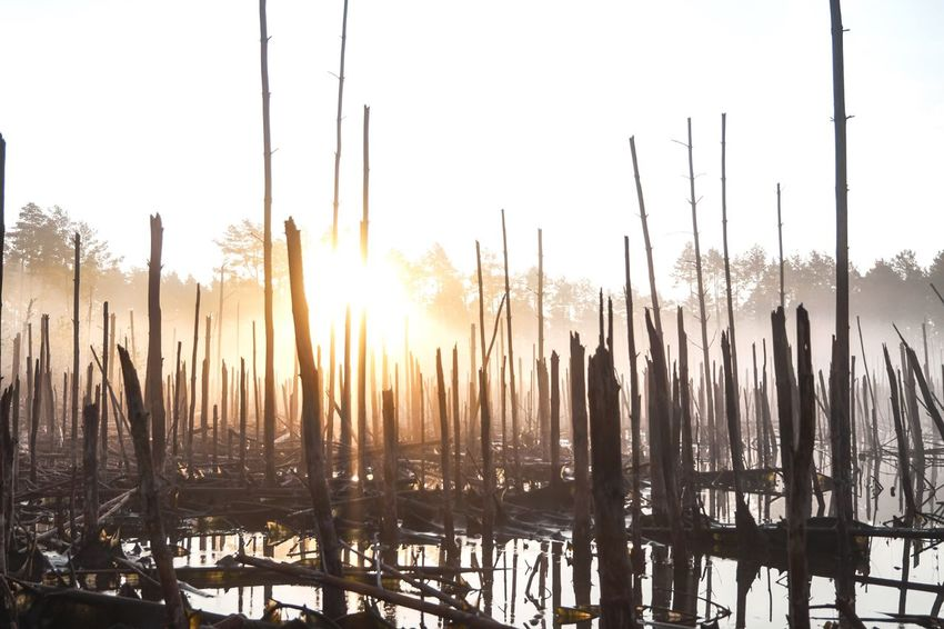No People Outdoors Nature Cold Temperature Day Sunlight Sky Water Landscape Been There. Be. Ready. Winter Travel Destinations Beauty In Nature Swamp Fog Foggy Morning Go Higher