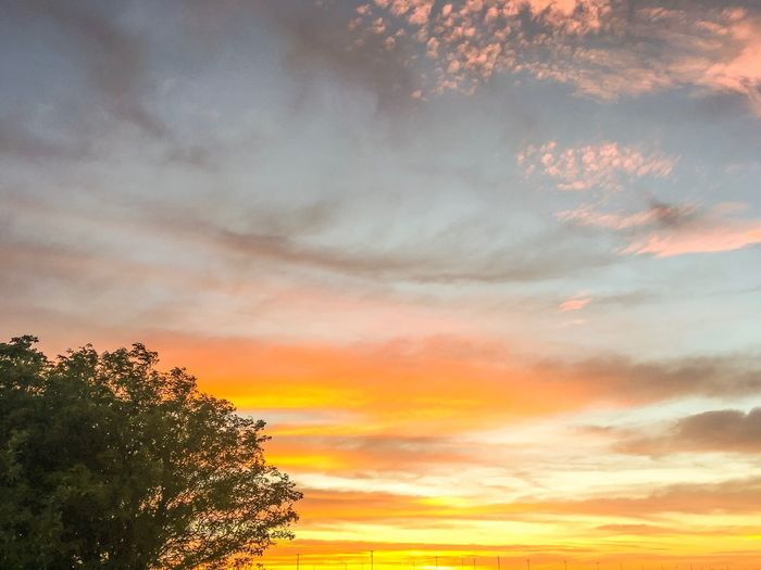Sky Sunset Cloud - Sky Beauty In Nature Orange Color Plant Tree Scenics - Nature Low Angle View No People Tranquility Nature Tranquil Scene Dramatic Sky Growth Outdoors Branch Romantic Sky Idyllic Silhouette