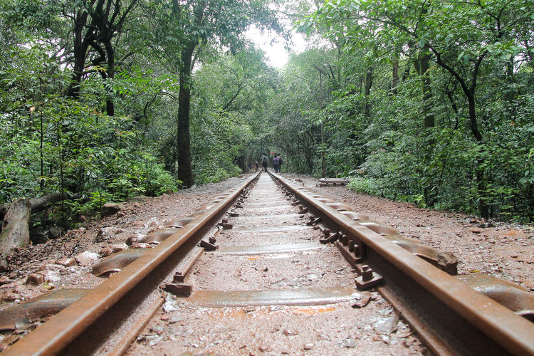 Beauty In Nature Day Diminishing Perspective Forest Greenery Growth Keep Traveling Long Way From Home Monsoon Nature Non-urban Scene Railroad Track Railway Railway Track Scenics Surface Level The Way Forward Toy Train Toy Train Track Tranquil Scene Tranquility Transportation Tree Tree Trunk Way Ahead