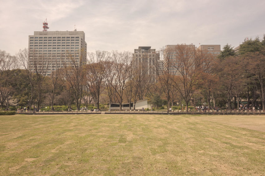 Capital Cities  Citypark Grass Hibiya Park Kasumigaseki Rx100 Sony Sony Rx100 Spring Has Arrived Tokyo Tokyo,Japan 日比谷公園 春が来た