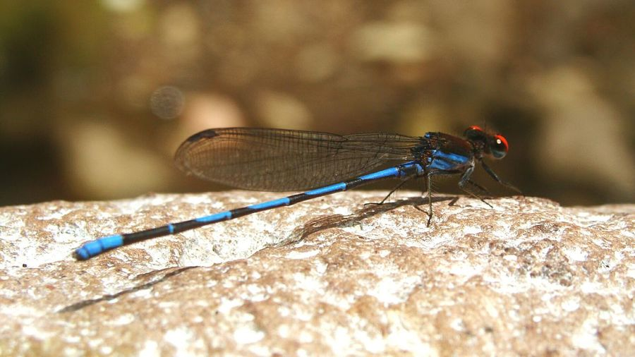 Close-up of damselfly on wall