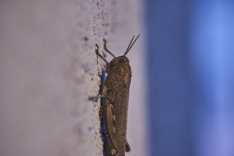 Close-up of insect on wooden post