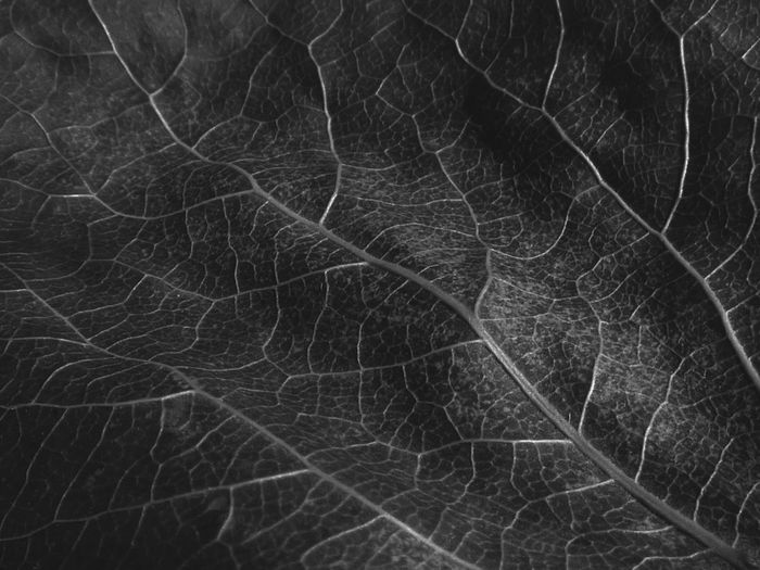 Leaf Brains. Textured  Full Frame Close-up Nature Leaf Abstract Fractals In Nature Leaf Veins Macro Photography Edit Junkie EyeEm Best Shots - Nature Eyeem Wallpaper EyeEm Gallery Enjoying Life Magnification Unity In Life Fractal Power