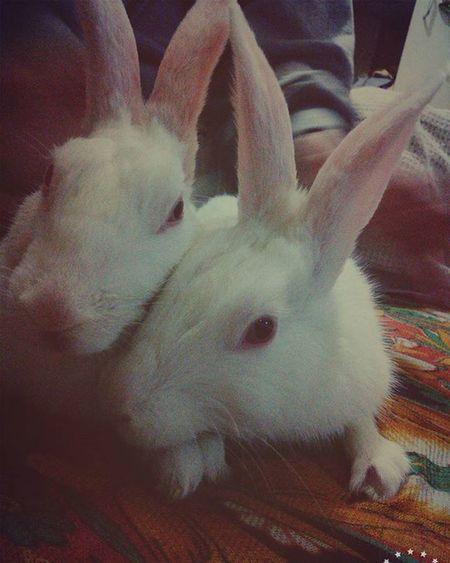 My two babies bunny & viney