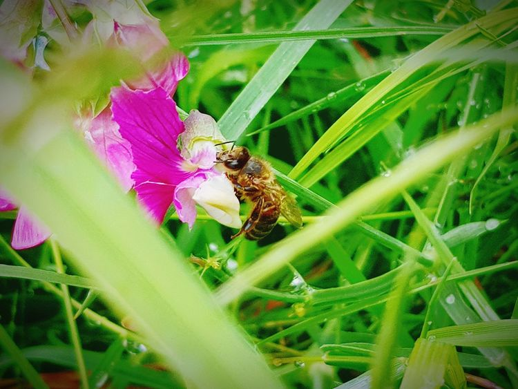 Insect One Animal Animals In The Wild Flower Animal Themes Nature Animal Wildlife Bee Plant Green Color Outdoors No People Growth Fragility Beauty In Nature Day Close-up Freshness My Front Garden