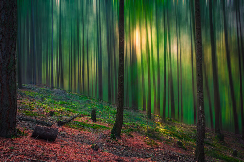 View of bamboo trees in forest