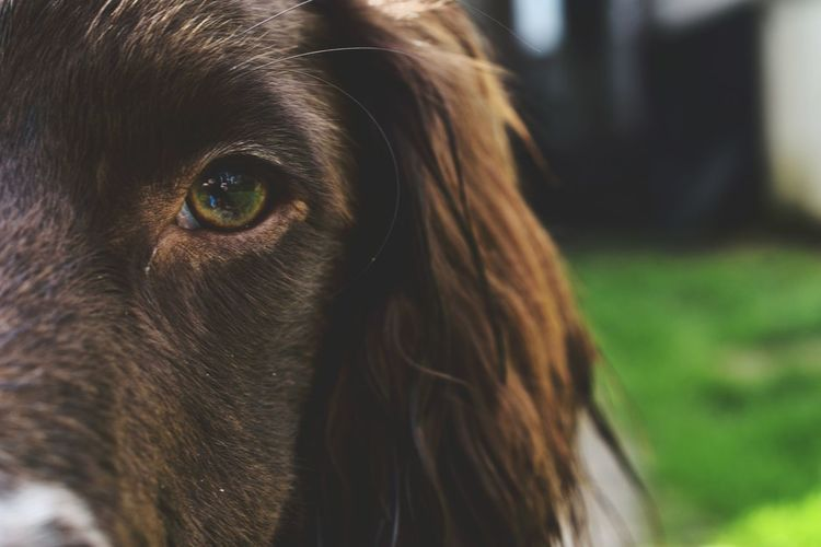 Beautiful Photography Nikonphotography Macro Taking Photos Nature NikonD5500 Doubletap Things I Like Beautyineverything Macro Photography Eyeemphotography Beginnerphotographer Beautiful Nature Photooftheday Springer Springerspaniel