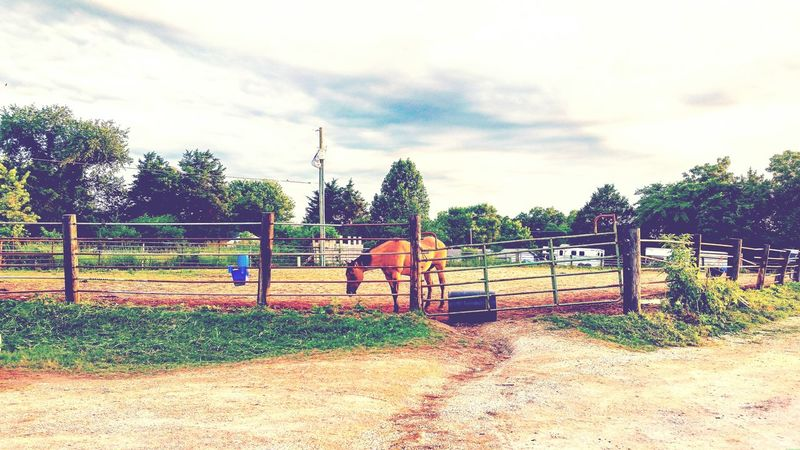 Just one of my favorite veiws from my favorite place! Horses Barnlife Southernstyle First Eyeem Photo
