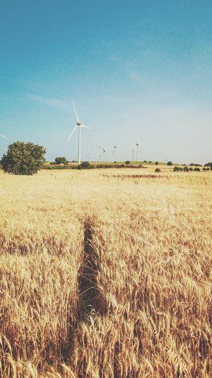 Geyikli Türkiye EyeEm Selects Environment Fuel And Power Generation Renewable Energy Wind Turbine Alternative Energy Sky Environmental Conservation Turbine Wind Power Landscape Land Nature Field Technology Day Rural Scene Sustainable Resources Clear Sky Sunlight Scenics - Nature