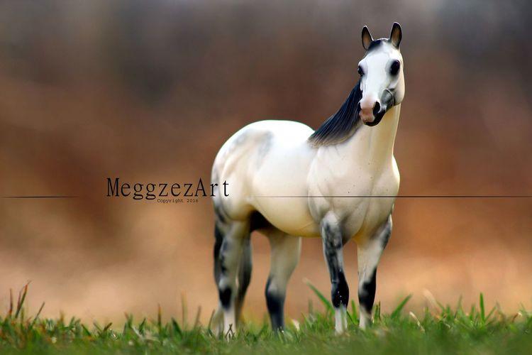 StillLifePhotography Horses Horse StillLife Breyer Modelhorsephotography Modelhorses Breyerhorses Modelhorse Breyerhorse Breyerphotography Breyerhorsephotography Breyers Toyhorse Toy Model Horse