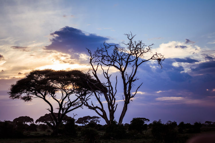 African Sunset Silhouette Tree Africa African Nature African Sunset Lovers Bare Tree Beauty In Nature Branch Cloud - Sky Day Landscape Lone Low Angle View Nature No People Outdoors Scenics Silhouette Sky Sunset Tranquil Scene Tranquility Tree Tree Trunk An Eye For Travel EyeEmNewHere