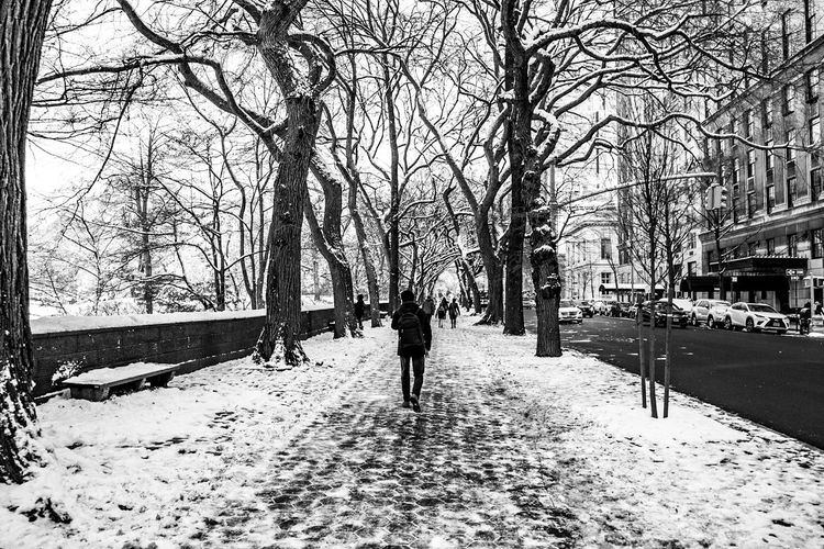 Rear view of man walking on snow covered bare trees