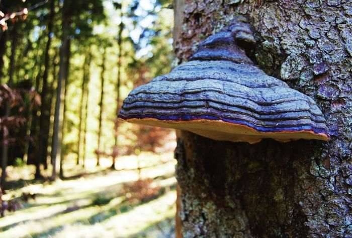 Mushroom Forest 50/50 Lines Learn & Shoot: Balancing Elements