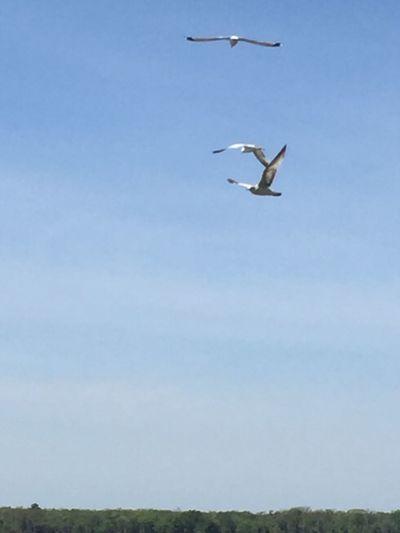 Flying Sky Bird Animal Animal Themes Vertebrate Animal Wildlife