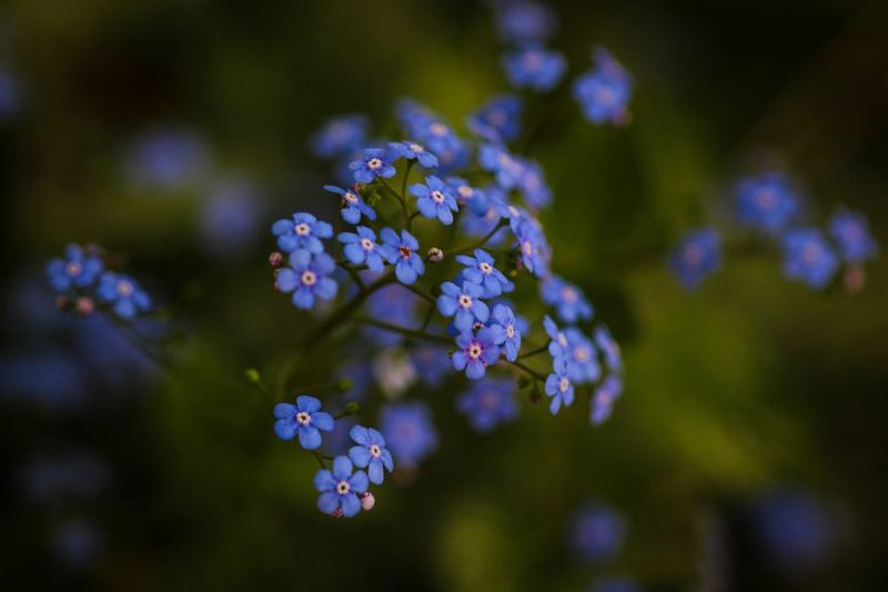 Floral Beauty Beauty In Nature Flower Flowering Plant Plant Fragility Vulnerability  Freshness Growth Focus On Foreground Nature Close-up Inflorescence Botany Flower Head No People Day Tree Blossom Petal Selective Focus