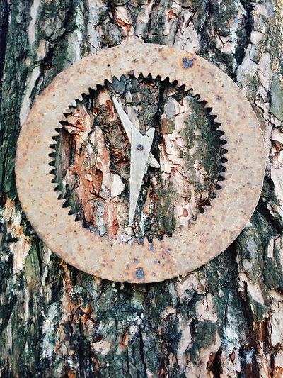 Creative idea Tree Trunk Homemade Clocks