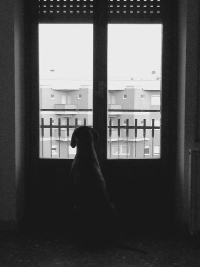 Waiting for... Free Theme for Bnw_friday_eyeemchallenge Blackandwhite Dog Dog Life Silhouette Emotions Monochrome Photography EyeEm Best Shots - Black + White Interior Views Your Design Story Everyday Lives Learn & Shoot: Layering Nana's Life Solitude Vizsla Waiting Home Is Where The Art Is Urban Lifestyle Check This Out It's Cold Outside Monochrome Showcase: January EyeEm Best Shots Citylife