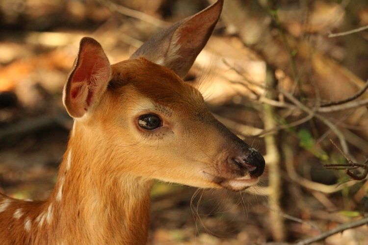 Hi, little bambi Fawn Bambi Animal Spontaneous Moments Joy Of Life Happiness Beauty In Nature Young Animal Young And Beautiful Freshness Beauty In Nature Quiet Moments Quiet Moments Quiet Place  Portrait Looking At Camera Close-up