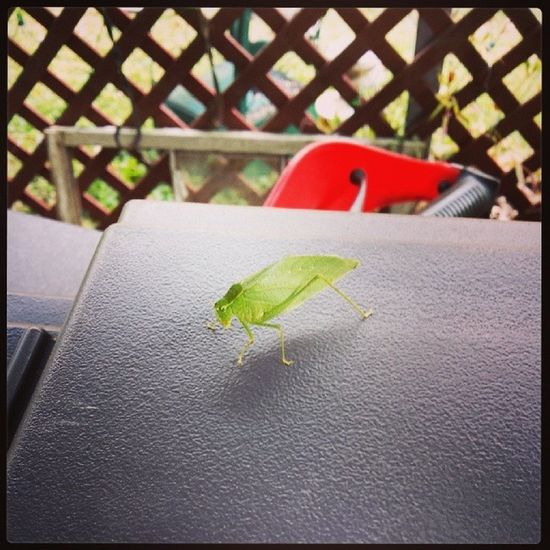 Visitor Naturesgift Littlegreendude