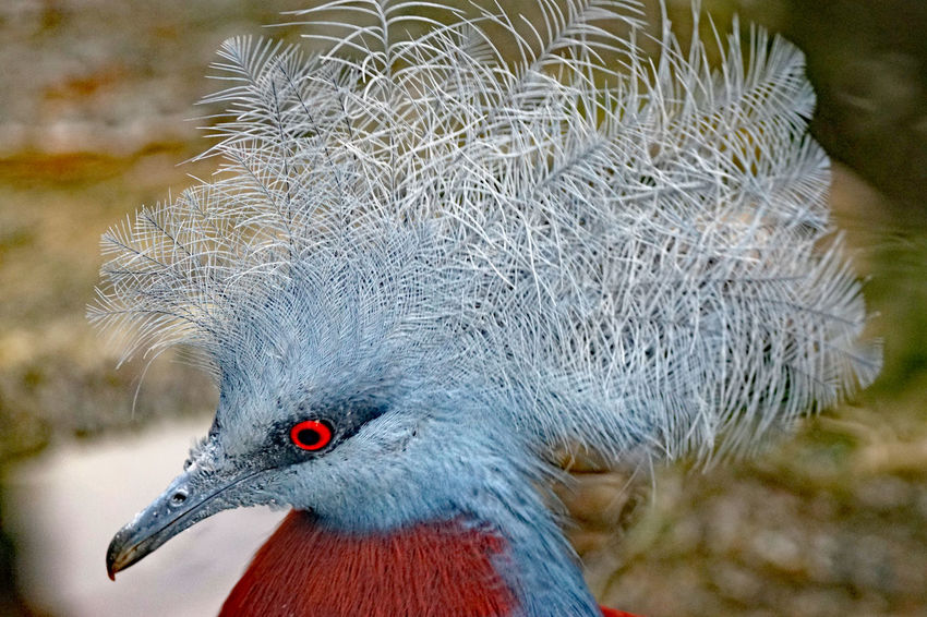Vögel/Birds Animal Animal Body Part Animal Eye Animal Head  Animal Neck Animal Themes Animal Wildlife Animal's Crest Animals In The Wild Beak Bird Close-up Day Focus On Foreground Looking Looking Away Nature No People One Animal Outdoors Profile View Side View Vertebrate