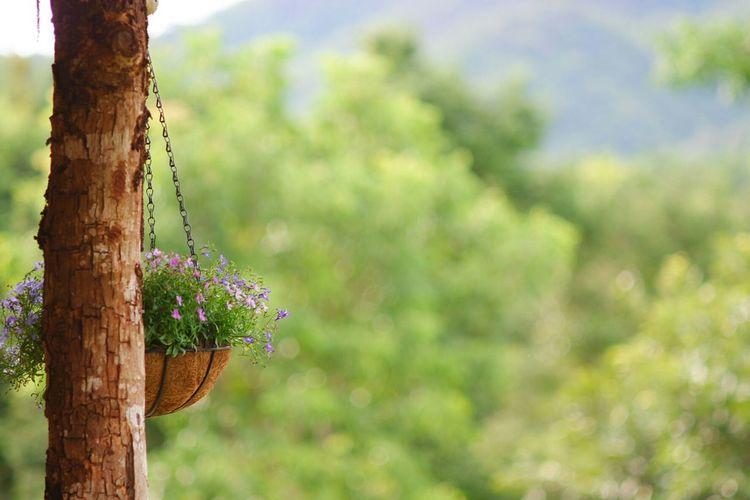 Close-up of purple flowering tree trunk