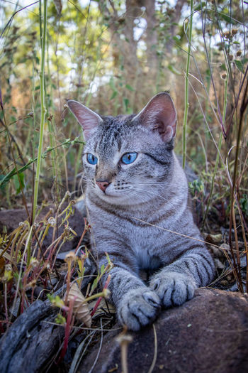 Portrait of a cat sitting on land