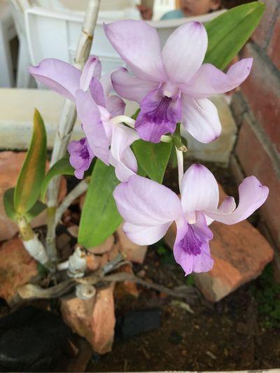 Flowering Plant Flower Plant Petal Vulnerability  Fragility Freshness