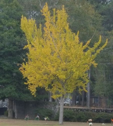 Fall colours Yellow Tree Growth Nature No People Beauty In Nature Fragility Flower Outdoors Day Close-up Fall Colours In The Fall Spartanburg