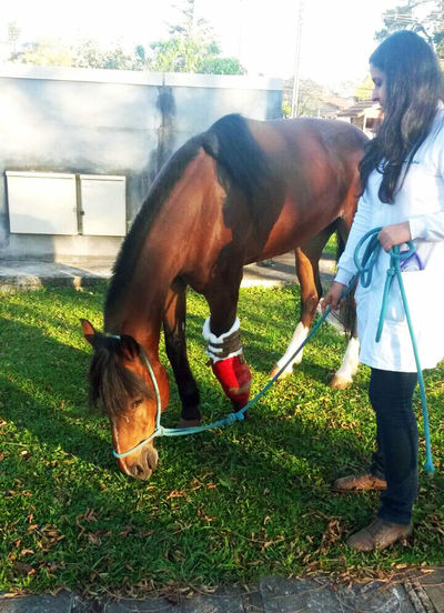 Animal Animal Themes Brown Care Carefree Caring Domestic Animals Grazing Horse Horse <3 Mammal My Job Recovery Standing Therapy Veterinaria Veterinarian Veterinary WomeninBusiness Zoology