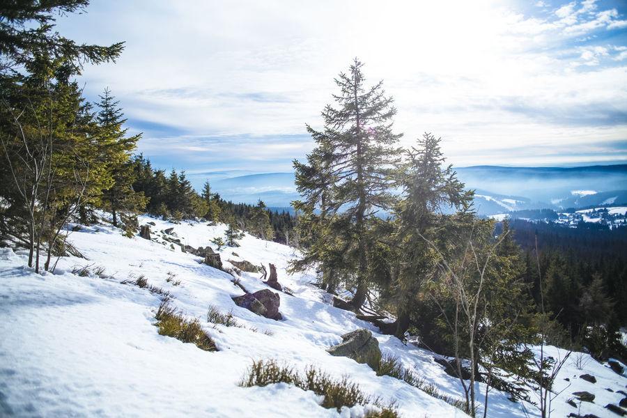Ochsenkopf, Fichtelgebirge Bavaria Fichtelgebirge Hiking Tree View Winter Forest Hikingadventures Landscape Mountain Ochsenkopf Peak Upper Franconia