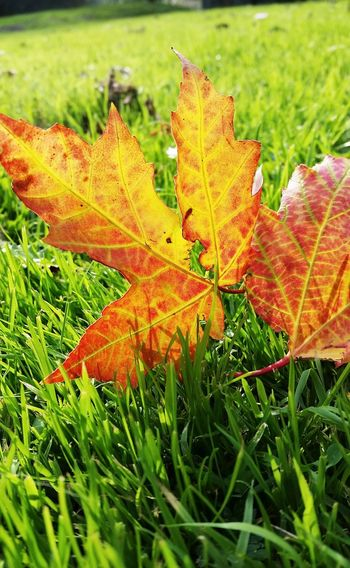 Autumn Colors Leafs Get Close Nature_collection