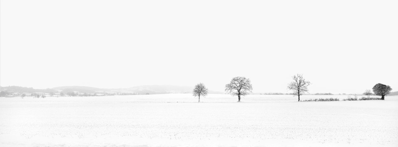 Trees on field against clear sky during winter